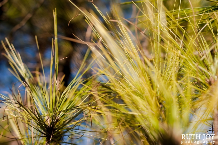 Gran Canaria Ruth Joy Photography _0114