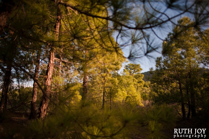 Gran Canaria Ruth Joy Photography _0126