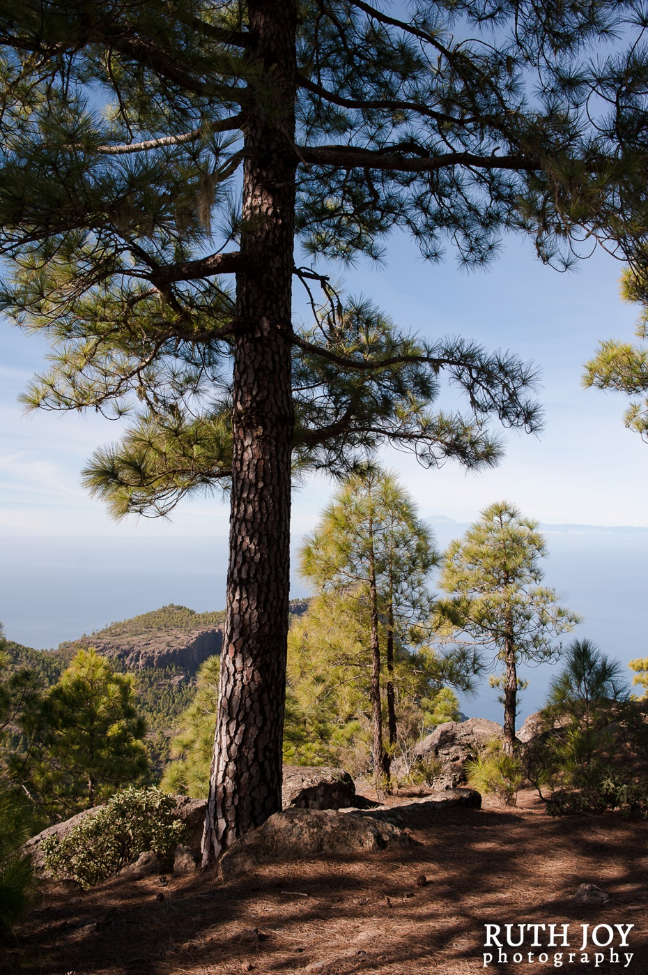 Gran Canaria Ruth Joy Photography _0149